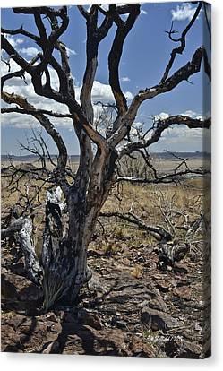Wildfire Scarred Mesquite Tree Skeleton Canvas Print