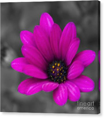 Wildflower 1 Canvas Print