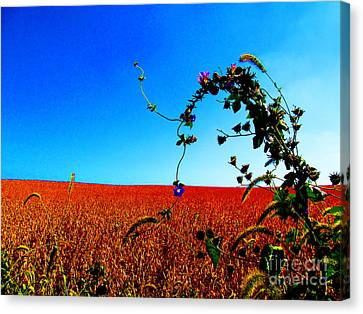 Wildflower And Soy Canvas Print by Tina M Wenger