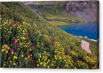 Copyright 2013 By Mike Berenson Canvas Print - Wildflower Blues From Ice Lake Basin by Mike Berenson