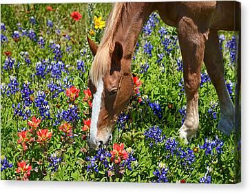 Wildflower Feast Canvas Print by Lynn Bauer