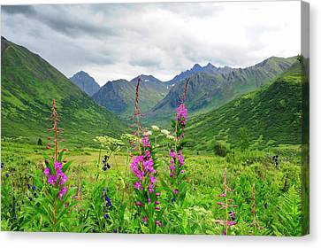 Wildflower Front And Center In This Canvas Print by Sheila Haddad