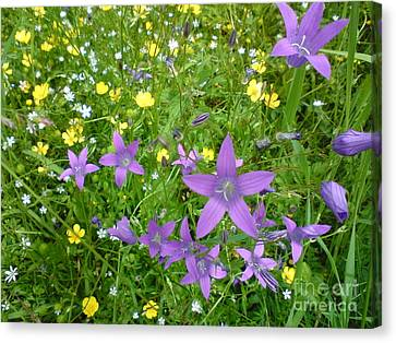 Wildflower Garden Canvas Print by Martin Howard