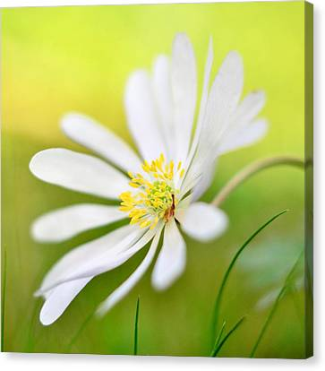 Wildflower Canvas Print by Gynt