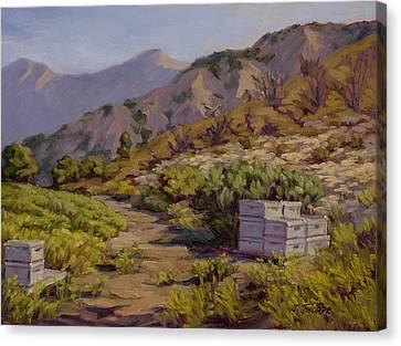 Wildflower Honey Fields Canvas Print by Jane Thorpe