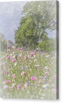 Wildflower Impressionism Canvas Print by Elaine Teague