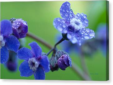 Wildflower In The Rain Canvas Print by Kathy Yates