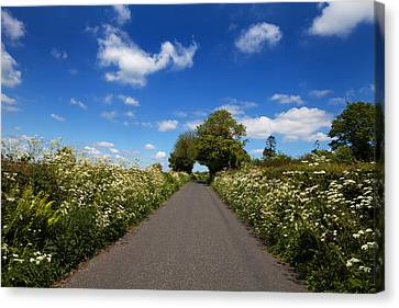 Wildflower Lined Country Road, Near Canvas Print by Panoramic Images