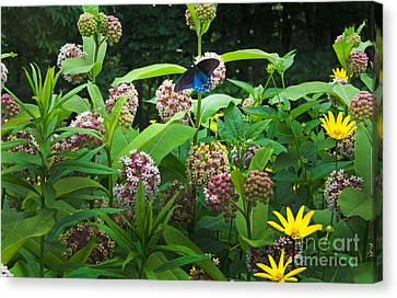 Wildflower Meadow Canvas Print by Kenneth Murray