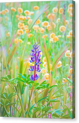 Canvas Print featuring the photograph Wildflower Meadow - Spring In Central California by Ram Vasudev