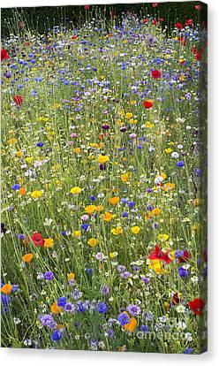 Wildflower Mix Canvas Print by Tim Gainey