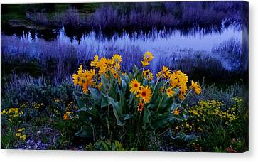 Wildflower Reflection Canvas Print by Dan Sproul