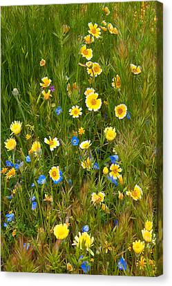 Canvas Print featuring the photograph Wildflower Salad - Spring In Central California by Ram Vasudev