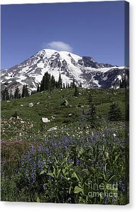 Wildflower Season At Mt Rainier Canvas Print
