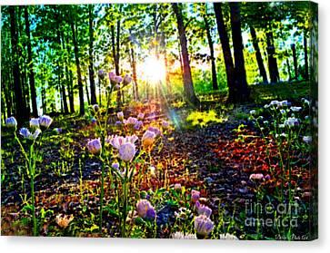 Wildflower Sunset Photoart Canvas Print by Debbie Portwood
