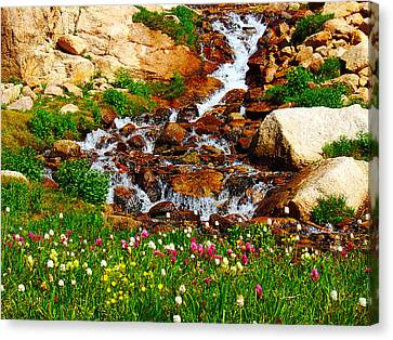 Wildflower Waterfall Canvas Print by Tranquil Light  Photography