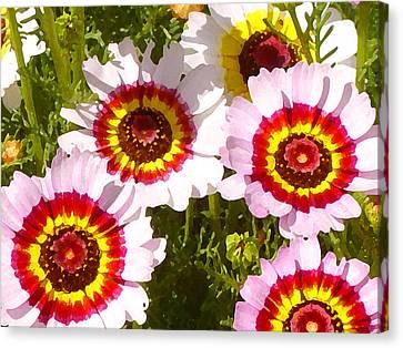 Wildflowerd Wide 1 Canvas Print by Amy Vangsgard