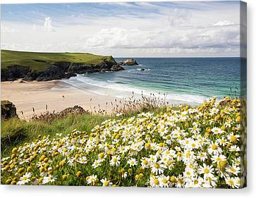 Wildflowers Above Porth Joke Canvas Print by Ashley Cooper