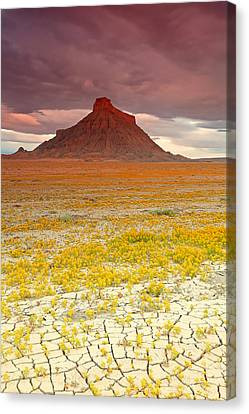 Wildflowers At Factory Butte. Canvas Print by Johnny Adolphson