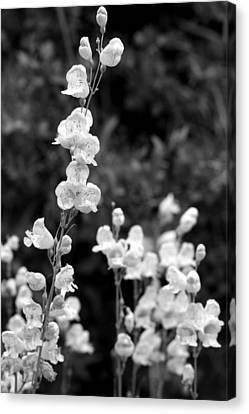 Wildflowers/bw1 Canvas Print by Diana Shay Diehl
