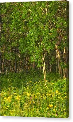 Canvas Print featuring the photograph Wildflowers Glacier National Park Montana by Ram Vasudev