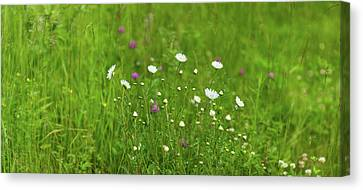 Wildflowers In A Field, Gooseberry Canvas Print by Panoramic Images