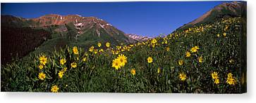 Wildflowers In A Forest, Kebler Pass Canvas Print by Panoramic Images