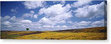 Wildflowers In Bloom, Table Mountain Canvas Print by Panoramic Images