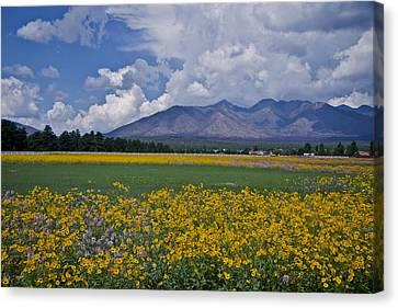 Canvas Print featuring the photograph Wildflowers In Flag 9611 by Tom Kelly