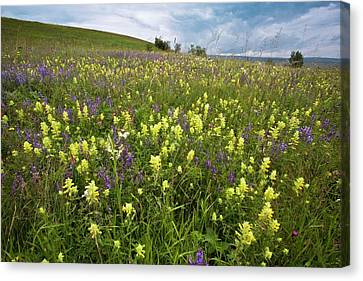 Wildflowers In Hay Meadow Canvas Print by Bob Gibbons