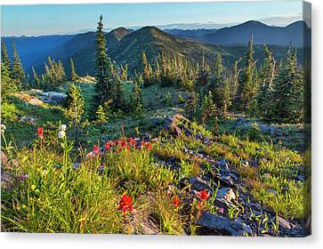 Wildflowers In The Whitefish Range Canvas Print by Chuck Haney