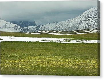 Wildflowers On Campo Imperatore Canvas Print by Bob Gibbons
