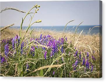 Wildflowers On Prince Edward Island Canvas Print by Elena Elisseeva