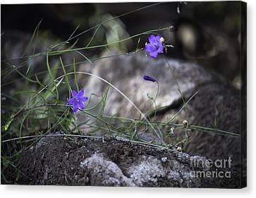 Wildflowers On Rocks Canvas Print