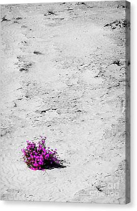 Wildflowers On White Sands Canvas Print