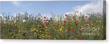 Wildflowers Panoramic Canvas Print