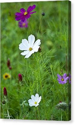 Wildflowers Tamed Canvas Print by Teresa Dixon