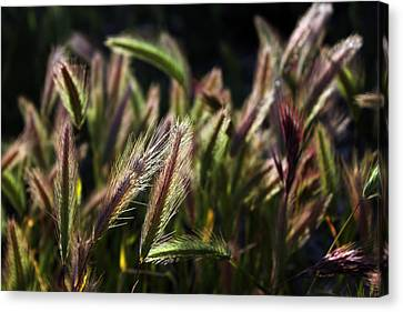 Canvas Print featuring the photograph Wildgrasses by Richard Stephen
