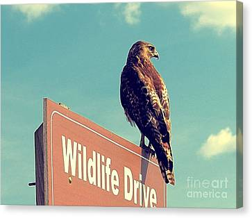 Wildlife Drive Greeter Canvas Print
