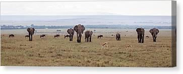 Wildlife On The Masai Mara - Kenya Canvas Print