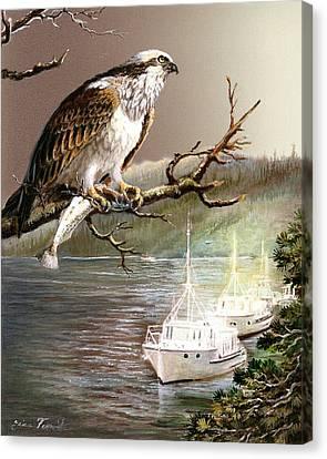 Wildlife Ospey Fishing Competition Canvas Print by Regina Femrite