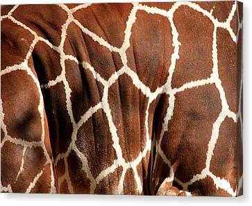 Wildlife Patterns  Canvas Print