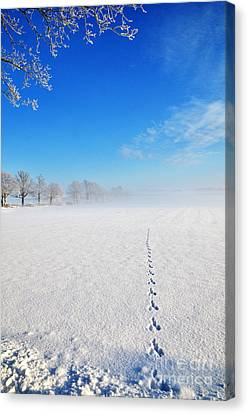 Wildlife Tracks Canvas Print