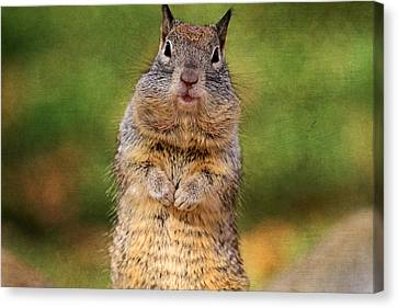 Will Work For Peanuts Canvas Print by Donna Kennedy