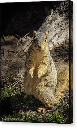 Will You Help A Squirrel In Need Canvas Print by LeeAnn McLaneGoetz McLaneGoetzStudioLLCcom