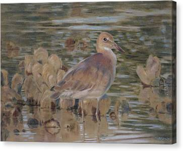 Willet Canvas Print by Christopher Reid