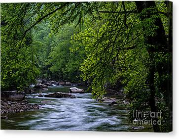 Williams River Scenic Backway Canvas Print by Thomas R Fletcher