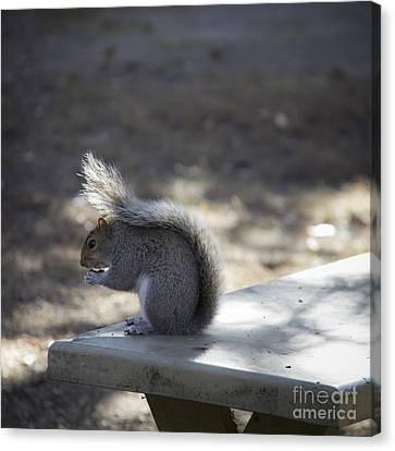 Williamsburg Squirrel Canvas Print