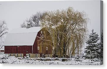 Willow And Barn After Nemo Canvas Print by Deborah Smolinske