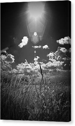 Canvas Print featuring the photograph Willow by Bradley R Youngberg
